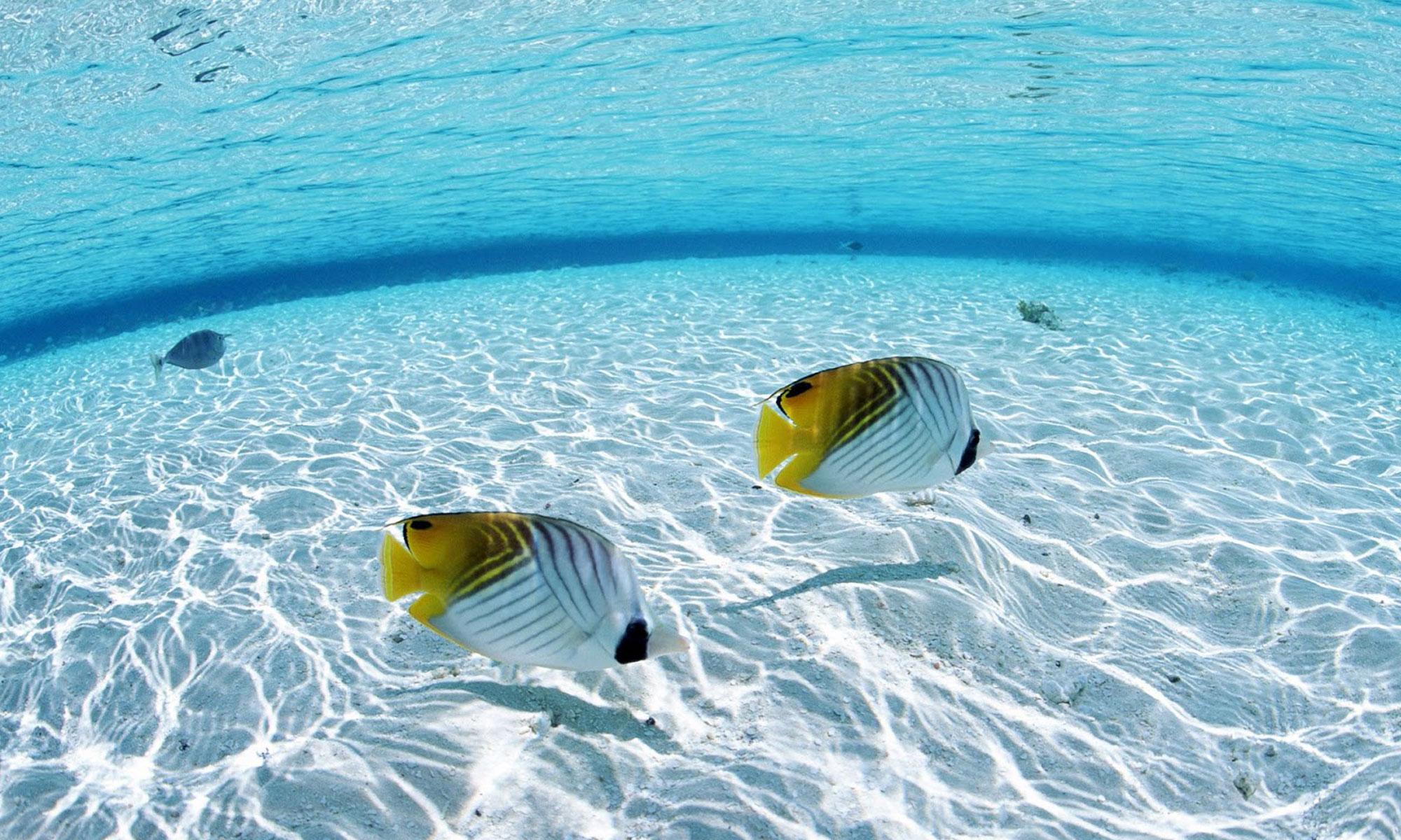 泳ぐおさかな